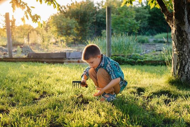 Un mignon petit garçon plante des pousses dans le jardin au coucher du soleil. jardinage et agriculture.