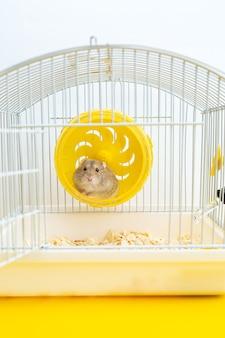 Mignon petit hamster est assis dans une roue dans une cage.
