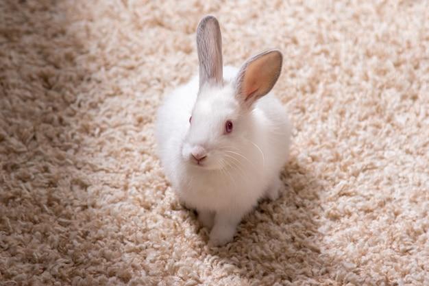 Mignon petit lapin blanc sur un tapis