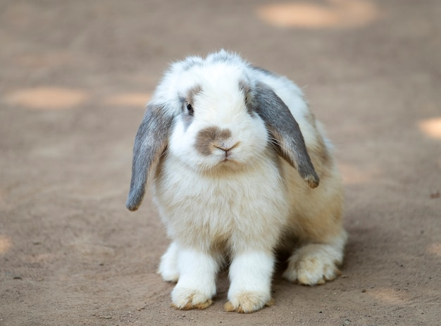 Mignon petit lapin