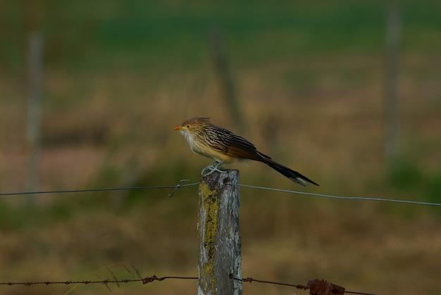 Mignon petit oiseau assis sur un fil de fer barbelé