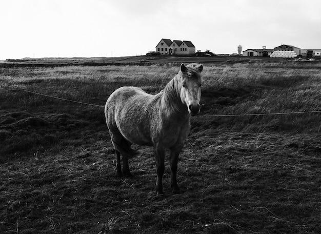 Mignon poney debout dans un champ