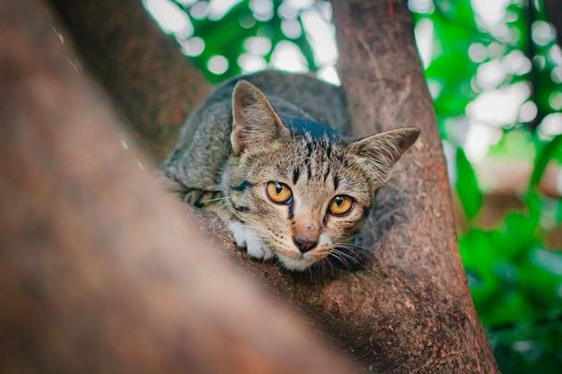 Mignon tabby chaton se détendre au sommet de l'arbre.