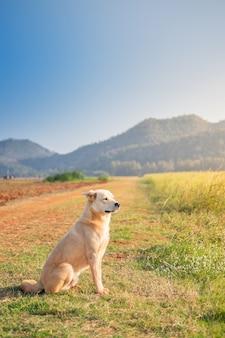 Mignon yeux rapprochés brun clair chien assis sur la petite herbe