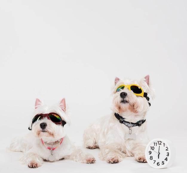 Mignons petits chiens avec une horloge