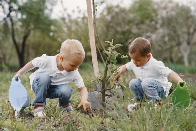 Mignons petits garçons plantant un arbre dans un parc