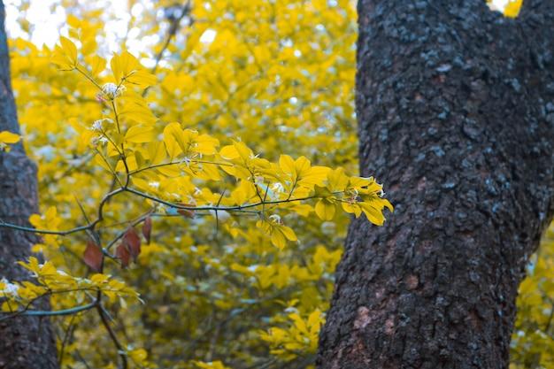 Milieu calme environnement bois clair tropical
