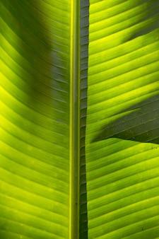 Milieu de la texture de la feuille de palmier