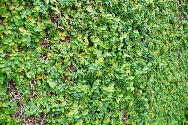 Milieux de vie feuilles beau beauté