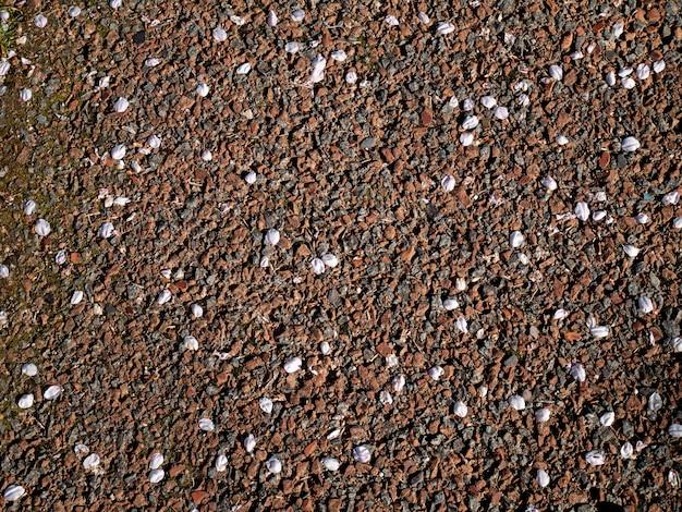 De minces pétales de fleurs de cerisier au sol