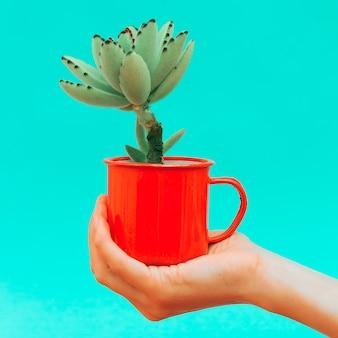 Mini cactus à la main. concept de décoration de conception de plantes