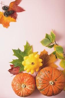 Mini citrouille en feuilles d'automne sur rose, pose plate