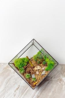Mini jardin succulent en verre florarium