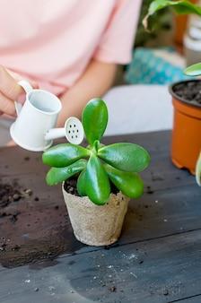 Mini succulente dans un pot de tourbe sur la table après le repiquage