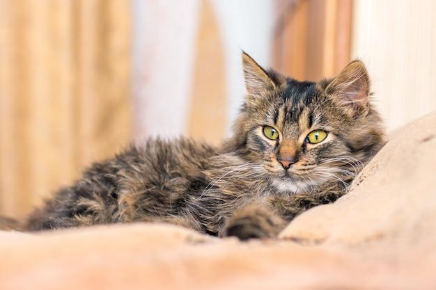Un minou rayé couché dans la chambre sur le canapé