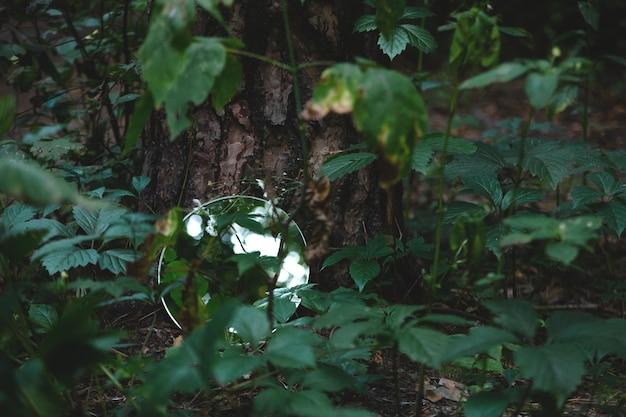 Miroir rond dans l'image à la mode abstraite de forêt vert foncé près du concept de nature