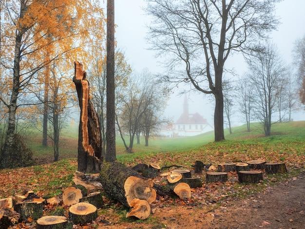 Mise au point douce. le vieil arbre brisé par le vent a été scié pour être éliminé dans le parc brumeux d'automne. nettoyage du parc en automne.