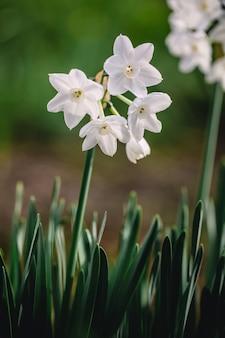 Mise au point peu profonde de fleurs blanches