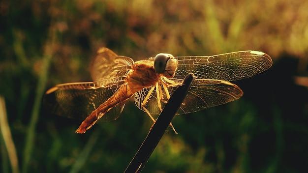 Mise au point sélective des animaux, mise au point sélective sur le sujet, flou d'arrière-plan, au cours du temps nature impressionnante belle nouvelle magnifiquement photo