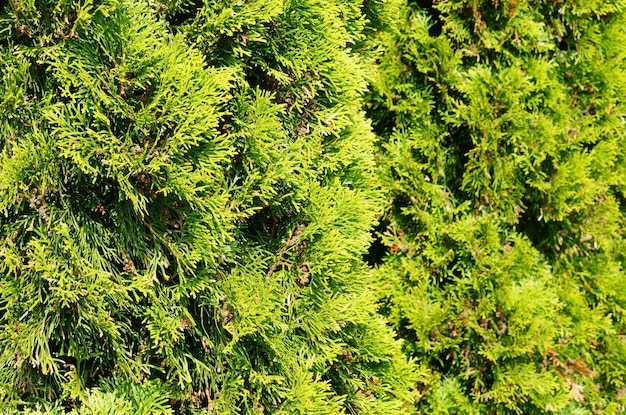 Mise au point sélective d'un arbre de jardin vert couvert par la lumière du soleil