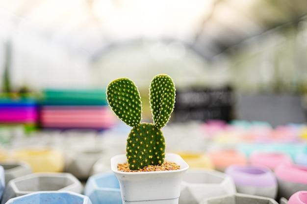 Mise au point sélective, un beau cactus en pot au jardin, plante succulente