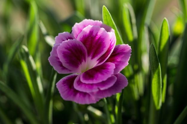 Mise au point sélective d'une belle fleur rose au milieu d'un champ couvert d'herbe