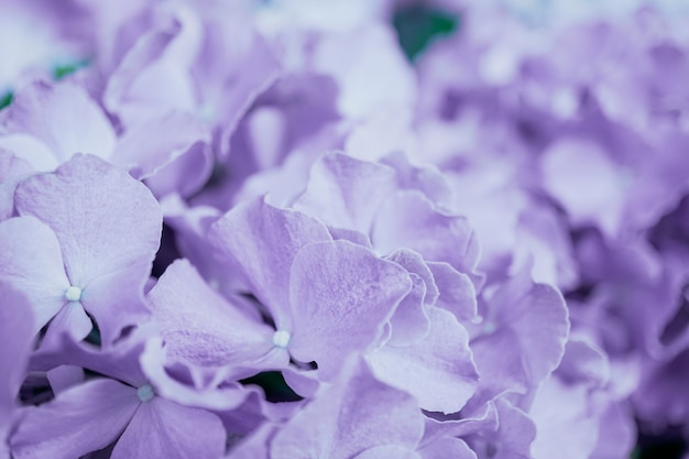 Mise au point sélective de belles fleurs colorées avec fond de bokeh d'été. style de couleur vintage.