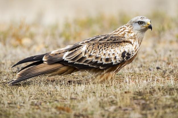 Mise au point sélective d'un cerf-volant rouge debout sur le sol avec un arrière-plan flou