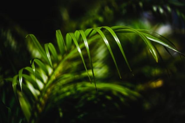 Mise au point sélective fermé l'été tropical feuille verte fond de ton sombre