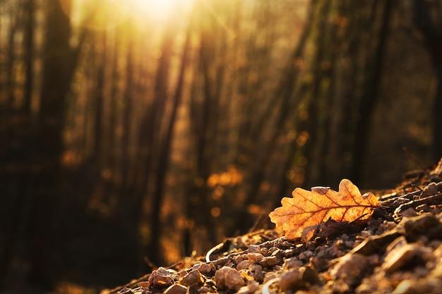 Mise au point sélective d'une feuille de chêne illuminée par la lumière dorée d'un coucher de soleil d'automne dans une forêt