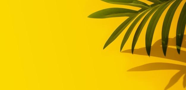 Mise au point sélective de la feuille de noix de coco exotique avec ombre