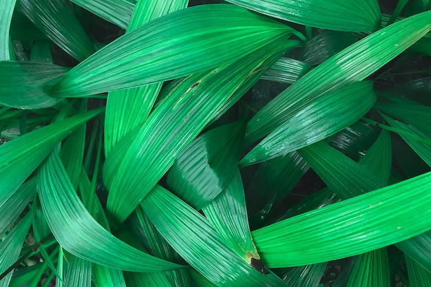 Mise au point sélective des feuilles vertes fraîches après la pluie