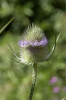 Mise au point sélective d'une fleur sauvage - parfait pour le mur