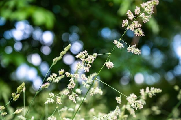Mise au point sélective de l'herbe dans un champ sous la lumière du soleil