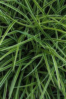 Mise au point sélective de l'herbe verte
