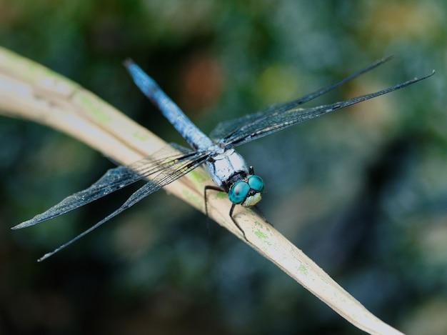 Mise au point sélective d'une libellule assise sur une fleur