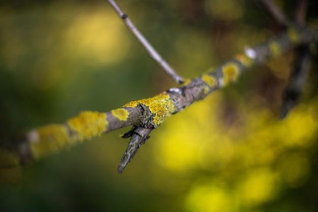 Mise au point sélective de la mousse sur la branche d'arbre