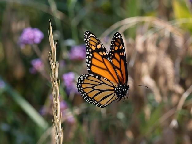 Mise au point sélective de papillon bois moucheté sur une petite fleur