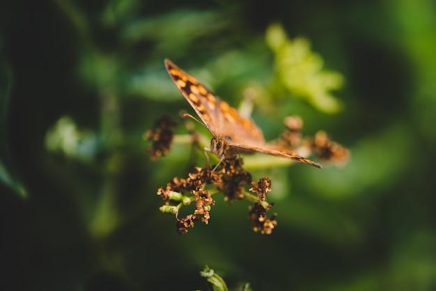 Mise au point sélective d'un pararge sur une plante dans un champ sous la lumière du soleil avec un arrière-plan flou