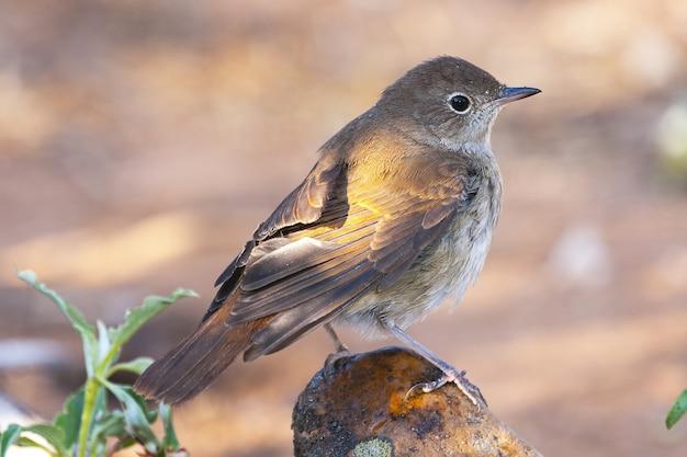 Mise au point sélective d'un petit oiseau coloré assis sur une pierre par les plantes