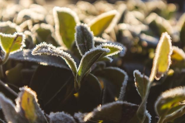 Mise au point sélective d'une plante verte dans un champ au printemps
