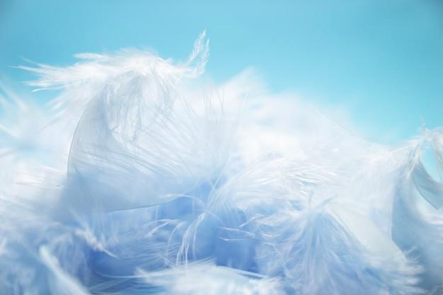 Mise au point sélective de style doux et flou pastel bleu turquoise de plumes de poulet sur le dos bleu