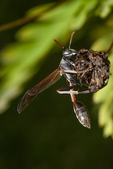 Mise au point sélective verticale d'un insecte