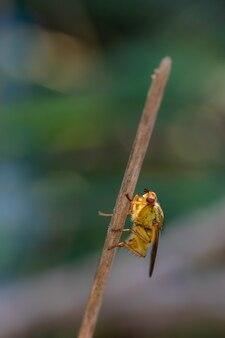 Mise au point sélective verticale shot d'une mouche diptereuse sur une brindille