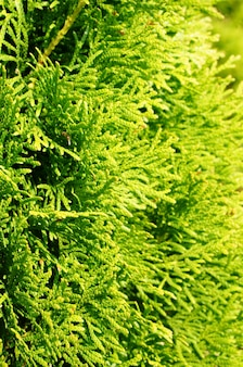 Mise au point sélective verticale tourné d'un arbre de jardin vert couvert par la lumière du soleil