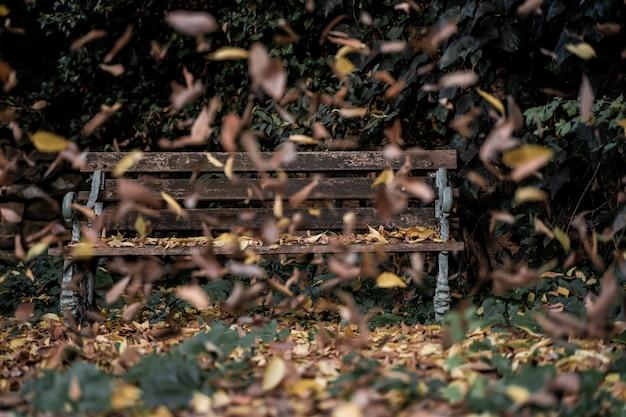Mise au point sélective sur un vieux banc en bois tandis que les feuilles tombent d'un arbre dans un jardin