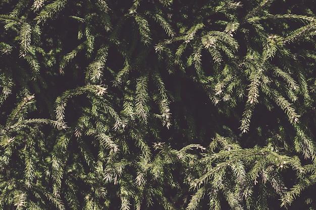 Mise en page créative faite de branches d'arbres de noël.