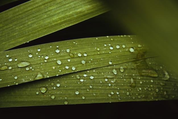 Mise en page créative faite de feuilles de nature.