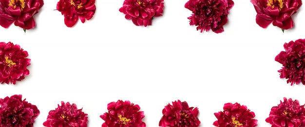 Mise en page créative de fleurs de pivoine rouge sur blanc