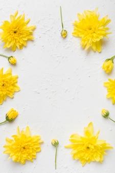 Mise à plat de l'arrangement des marguerites de printemps